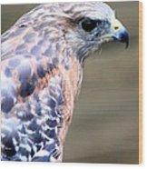 Red Shouldered Hawk Wood Print