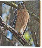 Red-shouldered Hawk On Branch Wood Print