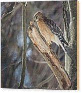 Red Shouldered Hawk Portrait Wood Print