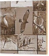 Red-shouldered Hawk Poster - Sepia Wood Print
