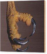 Red-shouldered Hawk Talons Wood Print