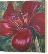 Red Silk Cotten Bombex Wood Print