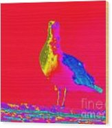 Red Sky Seagull Wood Print