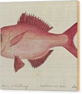 Red Snapper Fish Wood Print