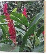 Red Spikes In St Lucia Wood Print