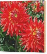 Red Spikey Flowers Wood Print