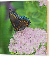 Red Spotted Admiral On Sedum - Vertical Wood Print