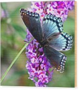 Red Spotted Purple Butterfly On Butterfly Bush Wood Print