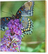 Red Spotted Purple Butterfly Photopainting Wood Print