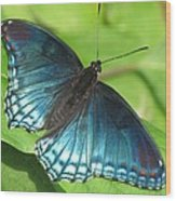 Red-spotted Purple Wood Print