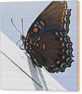 Red Spotted Purple Wood Print