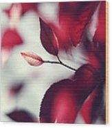 Red Spring Wood Print