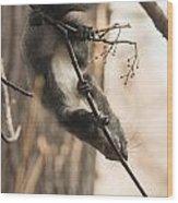 Red Squirrel - Balance Wood Print