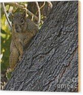 Red Squirrel   #1733 Wood Print