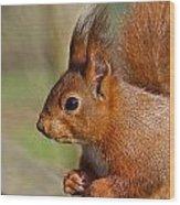 Red Squirrel 2 Wood Print