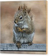 Red Squirrel On Patio Chair II Wood Print