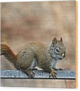 Red Squirrel On Patio Chair Wood Print