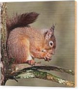 Red Squirrel Perched Portrait Wood Print