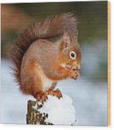 Red Squirrel Portrait Wood Print