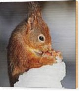 Red Squirrel With Nut In Snow Wood Print