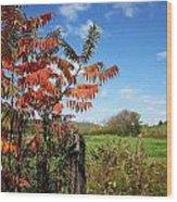 Red Sumac Tree Wood Print