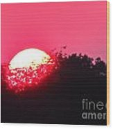 Red Summer Sunset Wood Print