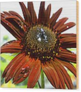 Red Sunflower After The Rain Wood Print
