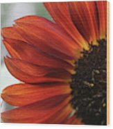 Red Sunflower Close-up Wood Print