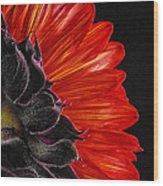 Red Sunflower Vii  Wood Print