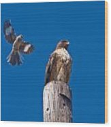 Red Tail And Friend Wood Print