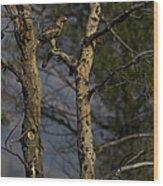 Red-tail Hawk   #0596 Wood Print