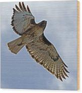 Red-tail Hawk #3094 Wood Print