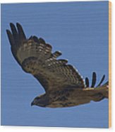Red-tail Hawk  #7602 Wood Print
