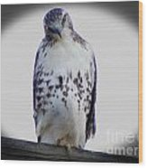 Red Tail Hawk Looking Curious Wood Print