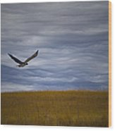 Red Tail Hawk Over The Prairie Wood Print