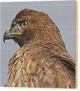 Red Tail Hawk Portrait Wood Print