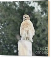 Red Tail Hawk Waiting On A Pole Wood Print