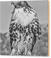 Red Tail Hawk Youth Black And White Wood Print