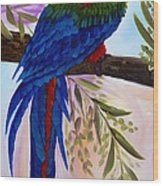 Red Tail Macaw Wood Print
