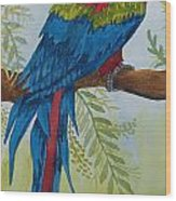 Red Tail Macaw Too Wood Print