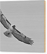 Red Tail Monochrome  Wood Print