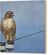 Red Tail On Watch Wood Print