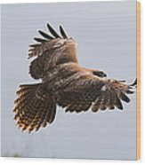 Red Tail Take Off Wood Print