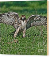 Red-tailed Hawk & Gopher Snake Wood Print