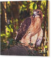 Red Tailed Hawk - 54 Wood Print