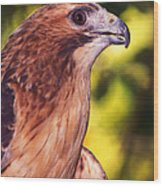 Red Tailed Hawk - 59 Wood Print