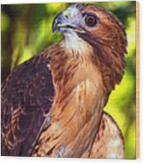 Red Tailed Hawk - 66 Wood Print