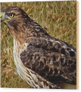 Red Tailed Hawk Close Up Wood Print