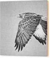 Red Tailed Hawk II Wood Print
