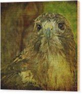 Red-tailed Hawk II Wood Print